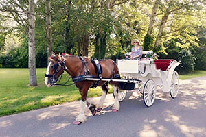 Cape May Christmas lights tour by horse carriage