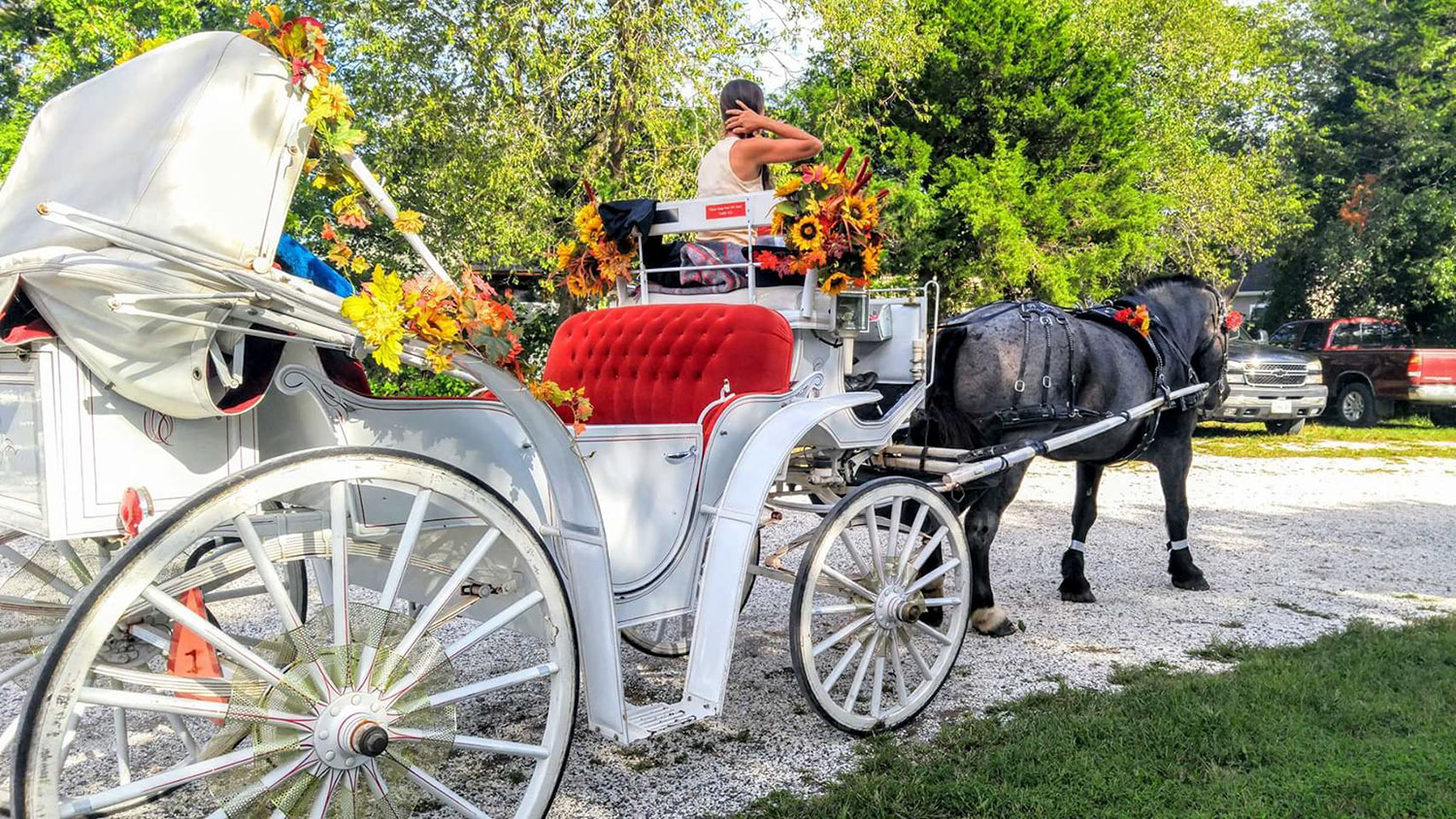 Carriage rides of historic Cape May